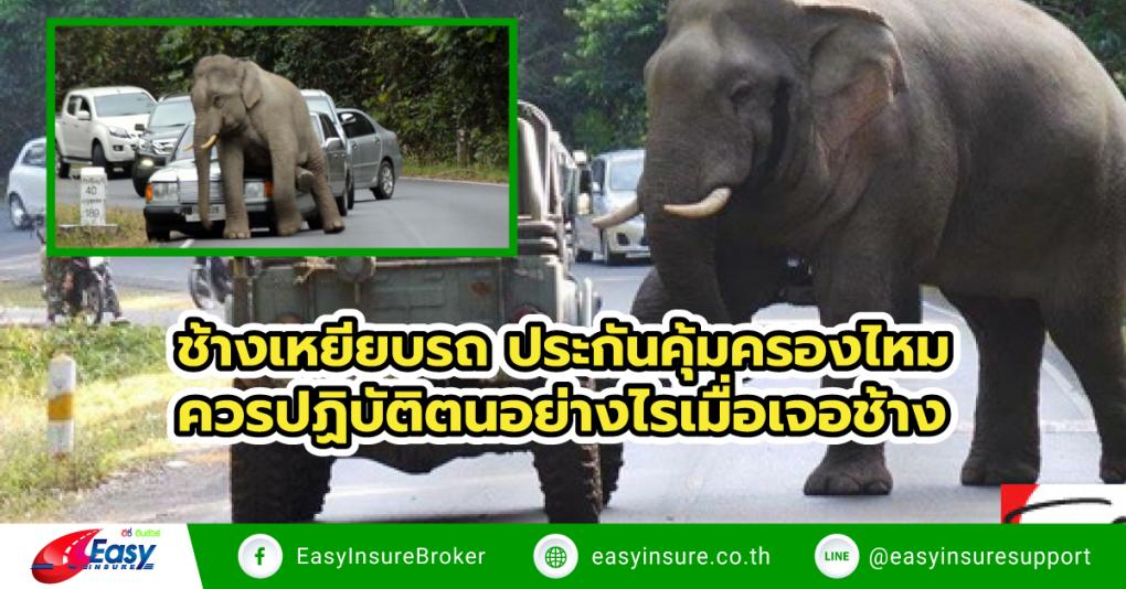 ช้างเหยียบรถ ประกันคุ้มครองไหม