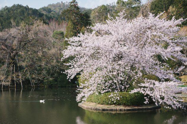 เที่ยวญี่ปุ่นช่วงไหนดี