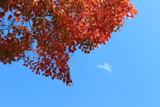 เที่ยวญี่ปุ่นเดือนไหนดี