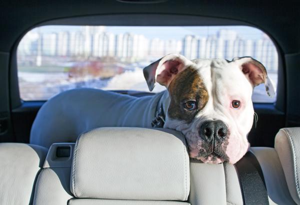 4 วิธีพาสุนัขเที่ยวแบบง่ายๆ ไม่ต้องกลัวรถเลอะอีกต่อไป